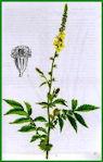 Herbiers Aigrem10