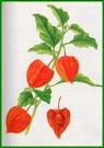 Herbiers Alkeke10