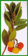 Herbiers Arbous10