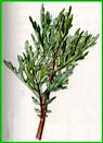 Herbiers Armois10