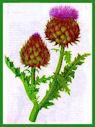 Herbiers Artich10