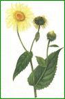Herbiers Aunee10