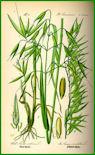 Herbiers Avoine10