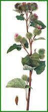 Herbiers Bardan10