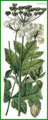 Herbiers Berce10