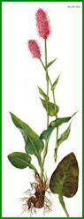 Herbiers Bistor10