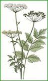 Herbiers Boucag10