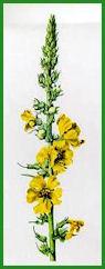 Herbiers Bouill10