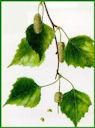 Herbiers Boulea10