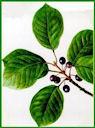 Herbiers Bourda10