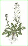 Herbiers Bourse10
