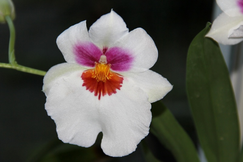 Orchideen - Seite 6 Img_7913