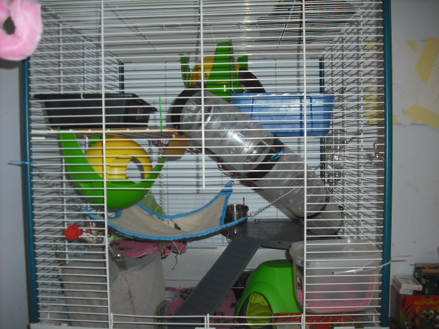 Photos de vos cages - Page 21 Phhtii10