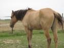 SAM - Poney typé Henson né en 1986 - adopté en septembre 2011 par Emeline - Page 4 Img_3913