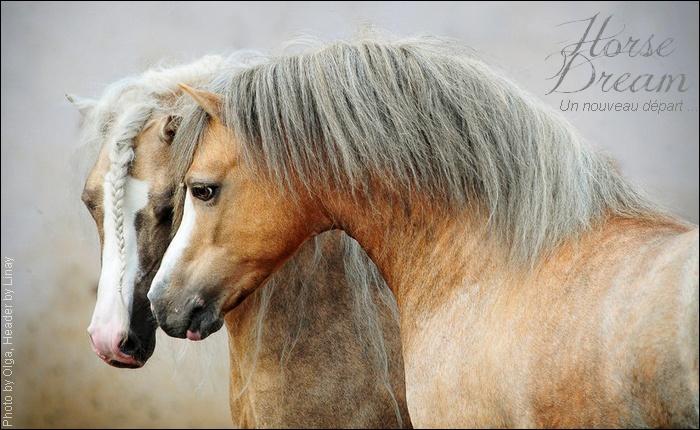 Horse Dream.