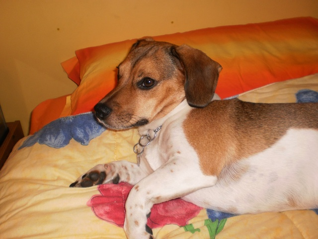 Here is Frankie! Pb191411