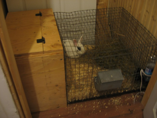 Dans quel pièce mettre mes lapins dans la maison? Img_3210
