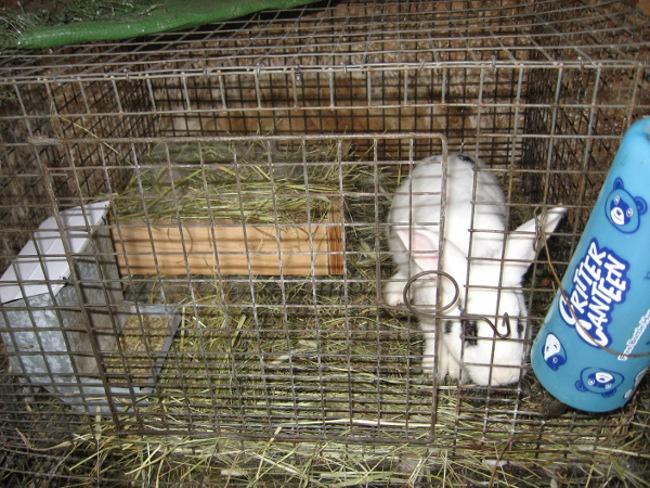 Portée de lapin pour la fête des mères! Mamanm10