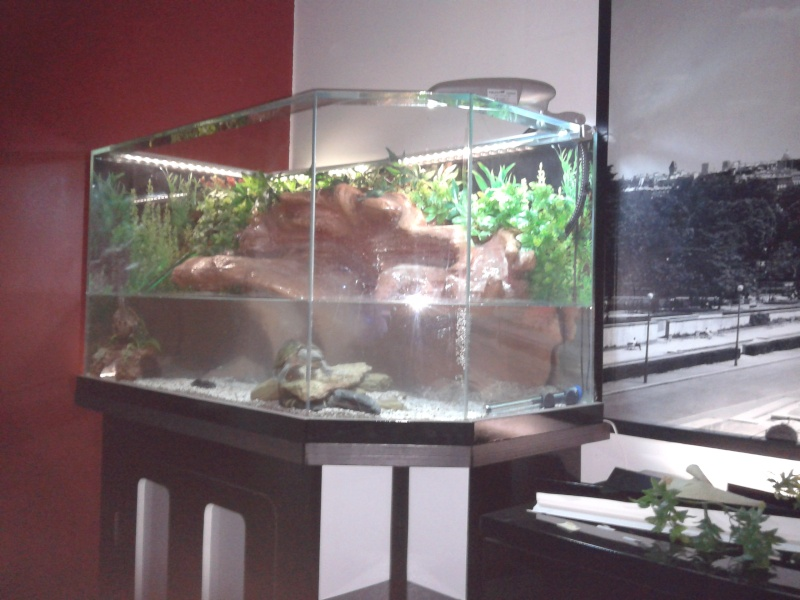 Terrarium MDF avec décor roches + 2-3 autres réalisations en cours 20120215