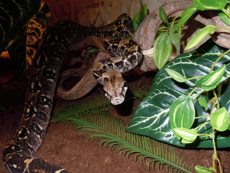 Terra Tropical test : Bci Chiapas! Dscn0331