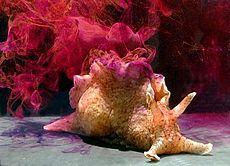 I dolori del giovane mollusco Aplysi11