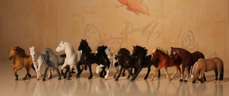 Panini horses Img_2710