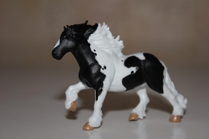 Panini horses Img_2711