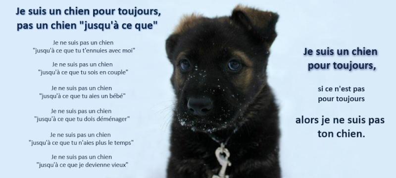"""Je suis un chien pour toujours pas un chien """"jusqu'à ce que"""" Un-chi10"""