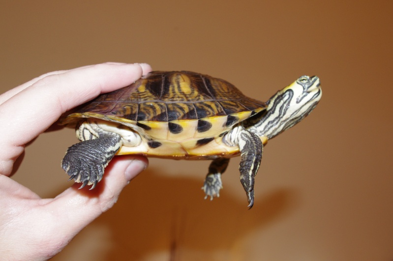 besoins des tortues de vtec59 Imgp1010