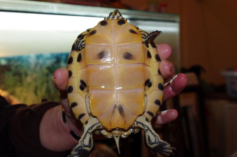 besoins des tortues de vtec59 Imgp1011
