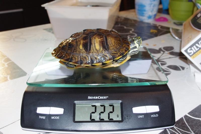 besoins des tortues de vtec59 Imgp1012