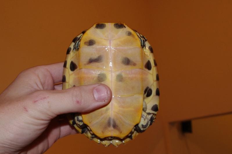 besoins des tortues de vtec59 Imgp1014