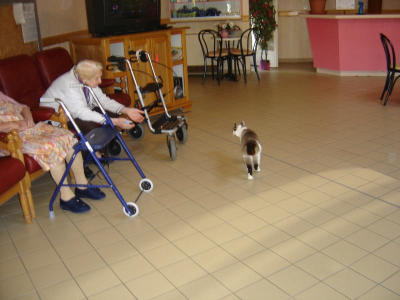 FELIX  CHat male en fourrière né  29/09/2004  adopté par LA CHATAIGNERAIE (37) Dsc06111