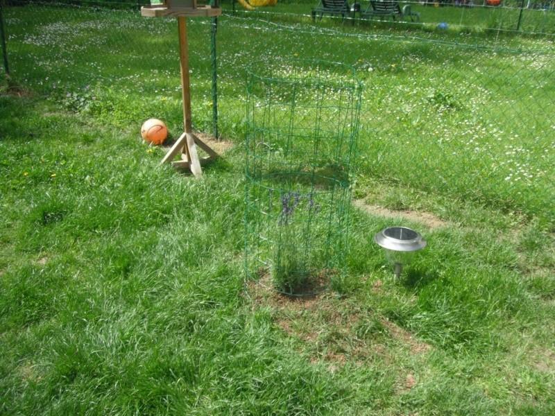 le siberien husky et un grand jardinier et oui Dscf2014