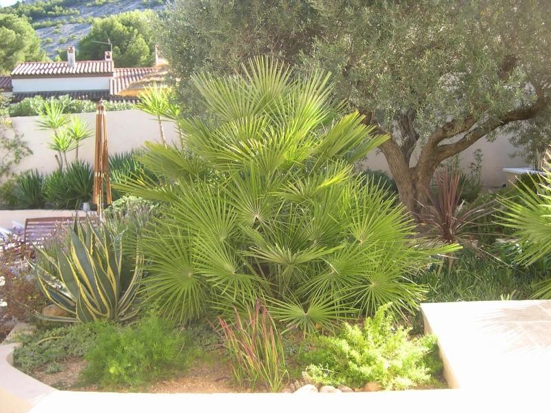 photos de mon jardin Photo_13