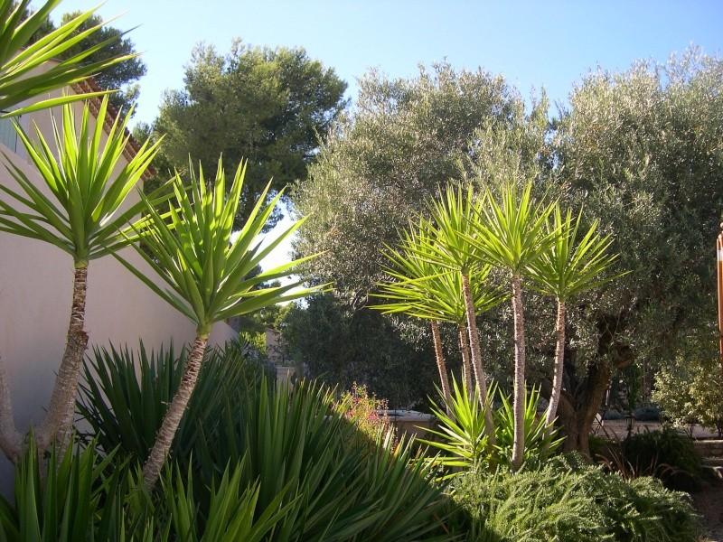 photos de mon jardin Photo_14