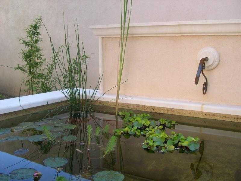 photos de mon jardin Photo_15