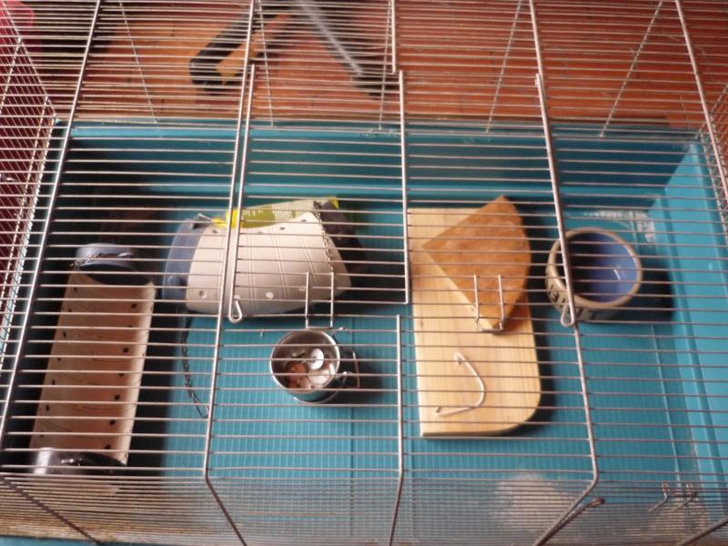 Donnation d'une cage pour 2 à 3 rats + équipements. P1040210