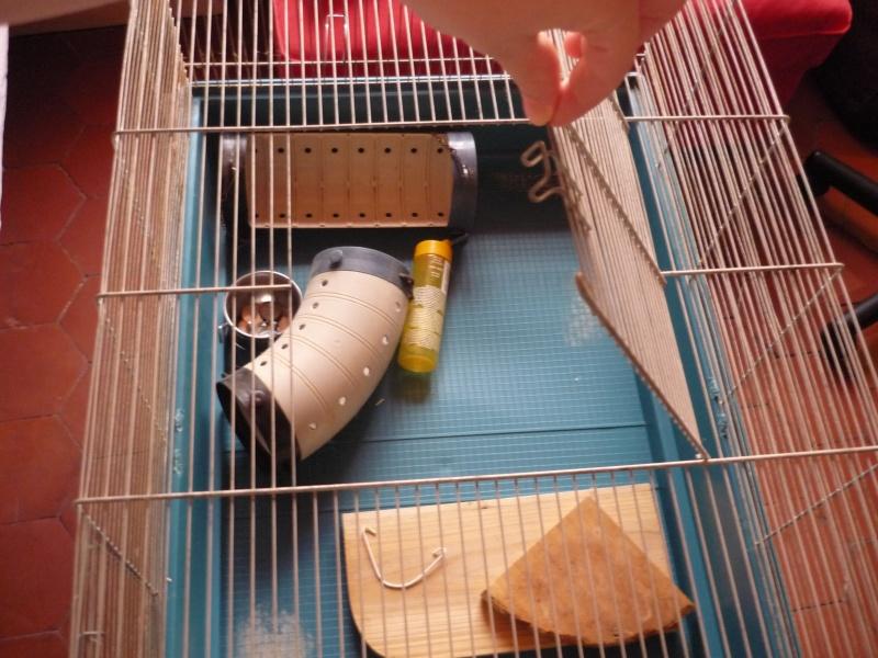 Donnation d'une cage pour 2 à 3 rats + équipements. P1040211