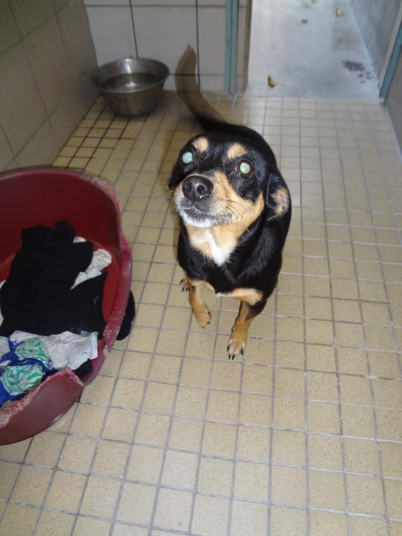Lilly x pinscher ,5 ans à l'adoption. 2141010