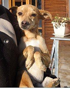 Adoption Hyde né en mai 2012. Hyde10