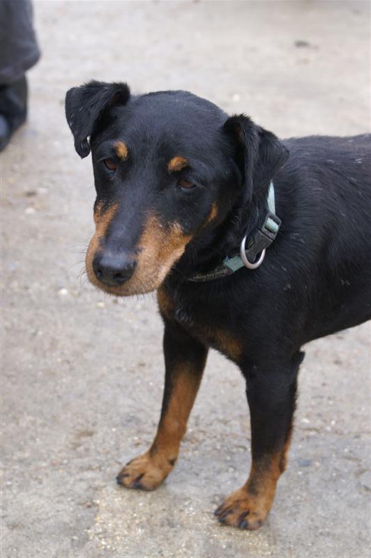 Adoption Titou né en 2001 Pict0311
