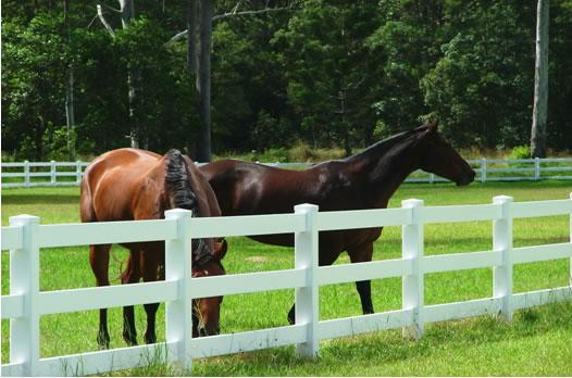 Horse place Horse-10