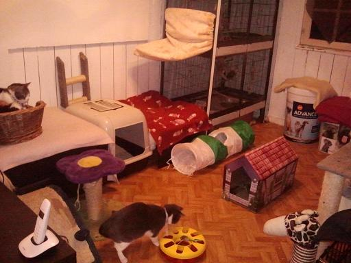 Noël des Handi'cats 2013 Phot1080