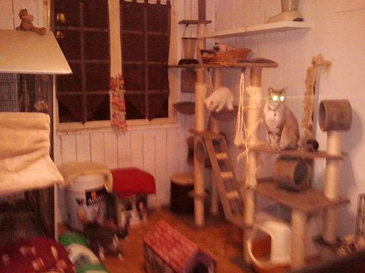 Noël des Handi'cats 2013 Phot1081