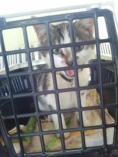 Adopté ! Photo356