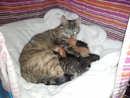 Arrivée chez les Handi'cats Photo453