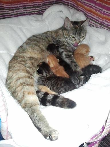 Arrivée chez les Handi'cats Photo454