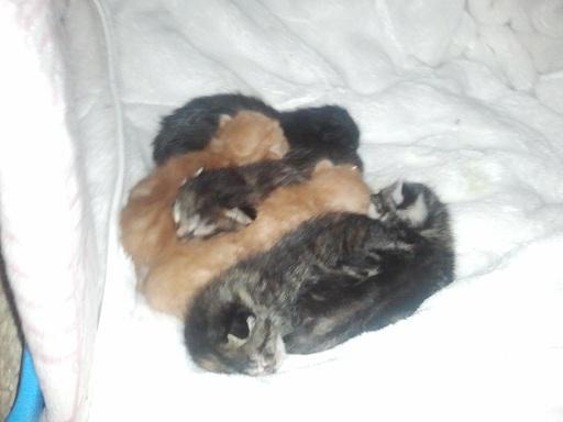 Arrivée chez les Handi'cats Photo456