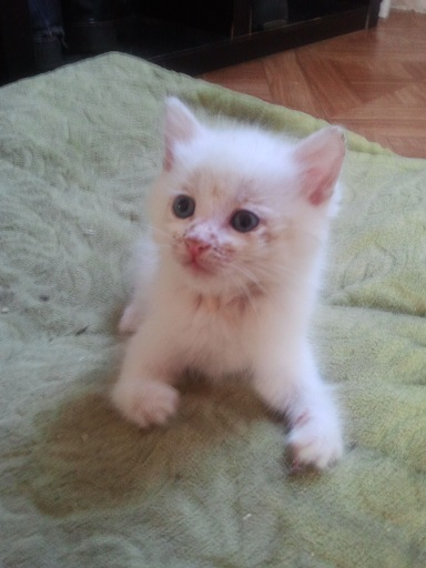 Baby Shyro ... Photo571